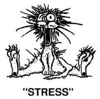 How Well Do You Handle Stress?