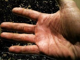 """""""Hands On"""" Winemaking Experience in SF"""